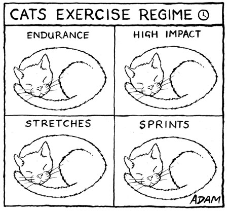 My cats exercise regime