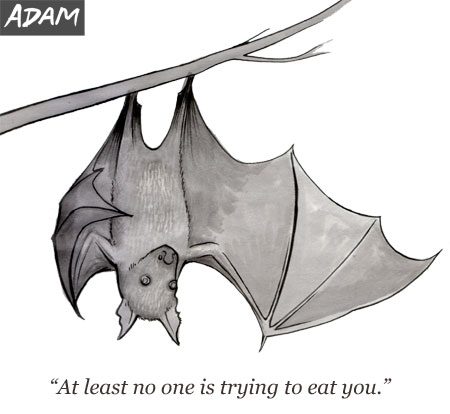 At least no one is trying to eat you.