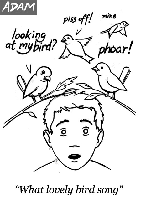 What lovely bird song